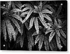 Fern And Shadow Acrylic Print