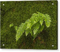 Fern Fronds On Moss Acrylic Print