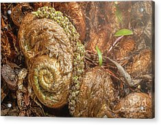 Fern Headdress Acrylic Print
