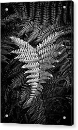 Fern In Black And White Acrylic Print