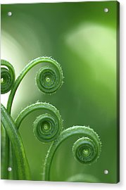 Fern In Forest Acrylic Print by © Machel Spence