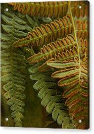 Fern In My Garden Acrylic Print