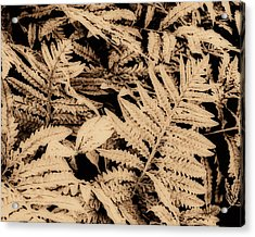 Fern In Sepia Acrylic Print