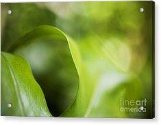 Fern Leaf Macro Acrylic Print