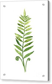 Fern Leaf Watercolor Painting Acrylic Print by Joanna Szmerdt