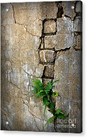 Fern Life Acrylic Print by Perry Webster