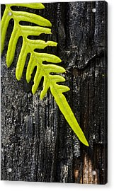 Fern On Burnt Log Acrylic Print