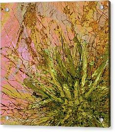Fern Series 32 Fern Burst Acrylic Print