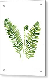 Fern Watercolor Painting Acrylic Print
