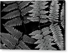 Acrylic Print featuring the photograph Ferns by Alana Ranney