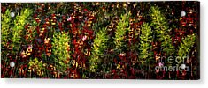 Ferns And Berries Acrylic Print