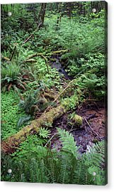 Acrylic Print featuring the photograph Ferns Galore by Ben Upham III