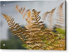 Ferns Growing By The River Acrylic Print by Barbara  White