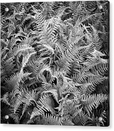 Ferns In Black And White Acrylic Print