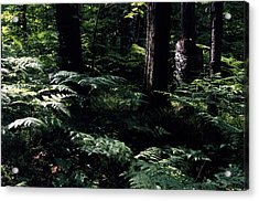 Acrylic Print featuring the photograph Ferns In The Forest Wc by Lyle Crump