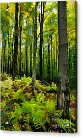 Ferns In The Forest - West Virginia Acrylic Print