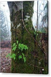 Ferns On A Foggy Day Acrylic Print by Ken Day