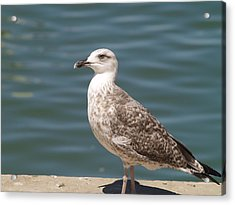 Acrylic Print featuring the photograph Ferragudo Gull by Michael Canning