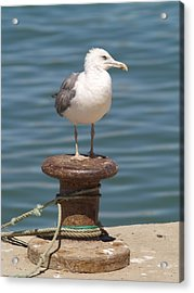 Ferragudo Seagull At Rest Acrylic Print by Michael Canning