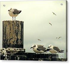 Ferry Hypnosis Acrylic Print