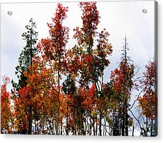Acrylic Print featuring the photograph Festive Fall by Karen Shackles