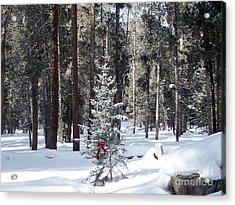 Festive Forest Acrylic Print