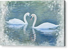 Festive Swan Love Acrylic Print
