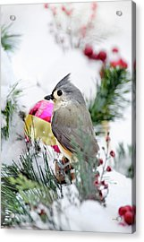 Festive Titmouse Bird Acrylic Print by Christina Rollo