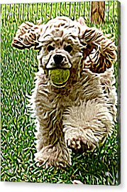 Fetch Acrylic Print by Laura Brightwood