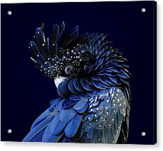 Fibonacci Cockatoo Acrylic Print