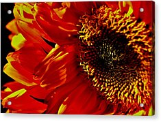 Fickle Sunflower Acrylic Print