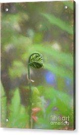Fiddlehead Fern - Macro Acrylic Print