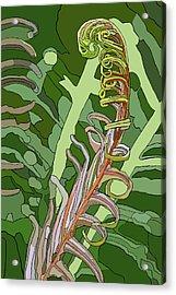 Fiddlehead Acrylic Print