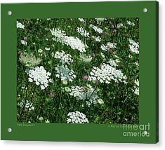 Field Bouquet-iv Acrylic Print by Patricia Overmoyer