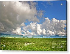 Acrylic Print featuring the photograph Field by Charuhas Images