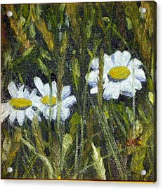 Field Daisies Acrylic Print by Susan Coffin