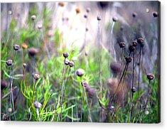 Field Flowers Acrylic Print