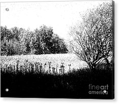 Field In Black And White Acrylic Print by John  Bichler
