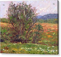Field In Spring Acrylic Print by Michael Camp