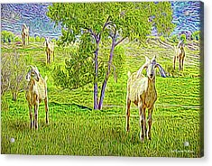Field Of Baby Goat Dreams Acrylic Print