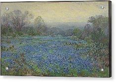 Field Of Bluebonnets Acrylic Print