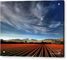 Field Of Color Acrylic Print