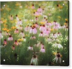 Field Of Coneflowers 5x6 Acrylic Print by James Barber