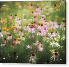 Field Of Coneflowers 5x6 Acrylic Print