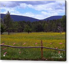 Field Of Dandelions Acrylic Print by Donna Cavanaugh