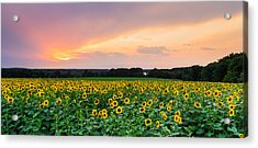 Field Of Dreams Acrylic Print
