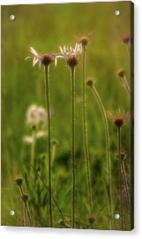 Field Of Flowers 3 Acrylic Print
