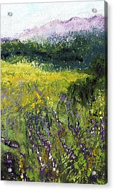 Field Of Flowers Acrylic Print by David Patterson