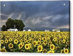 Field Of Flowers  Acrylic Print by James Steele