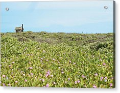 Field Of Flowers Acrylic Print by Michael Simeone